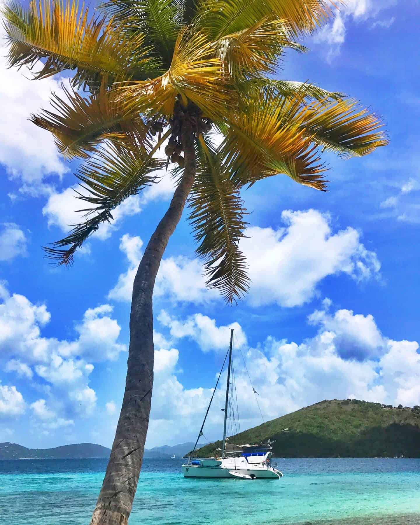 palm tree with a sailboat on crystal blue water in the backdrop