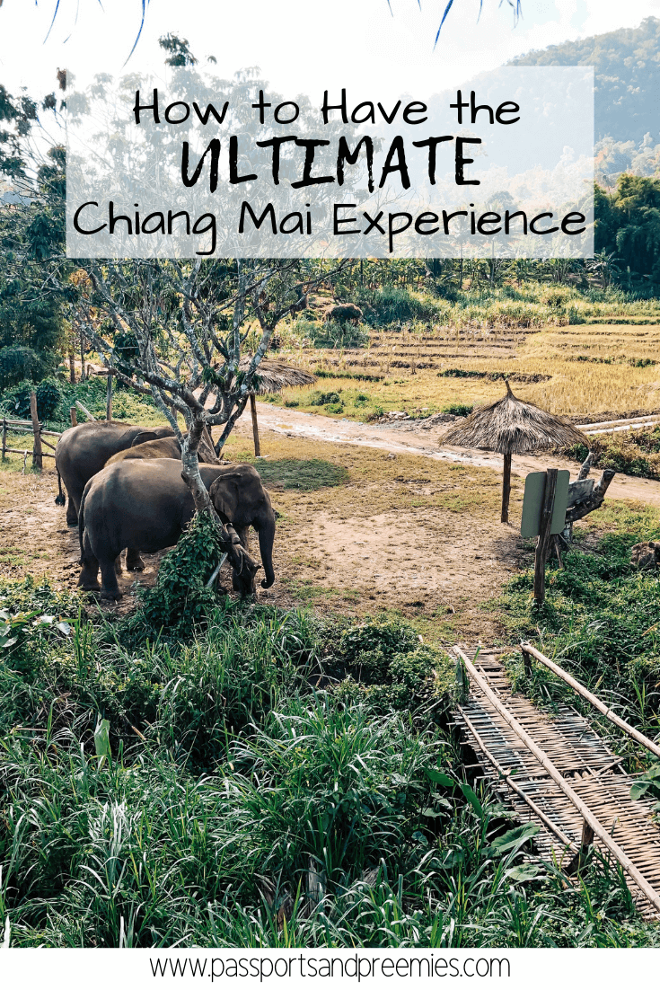 Pin Me - How to Have the Ultimate Chiang Mai Experience