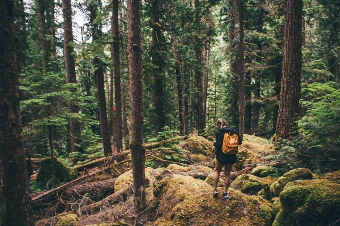 Travel Nurse Guide to Seattle – Everything You Need to Know For a Successful Assignment