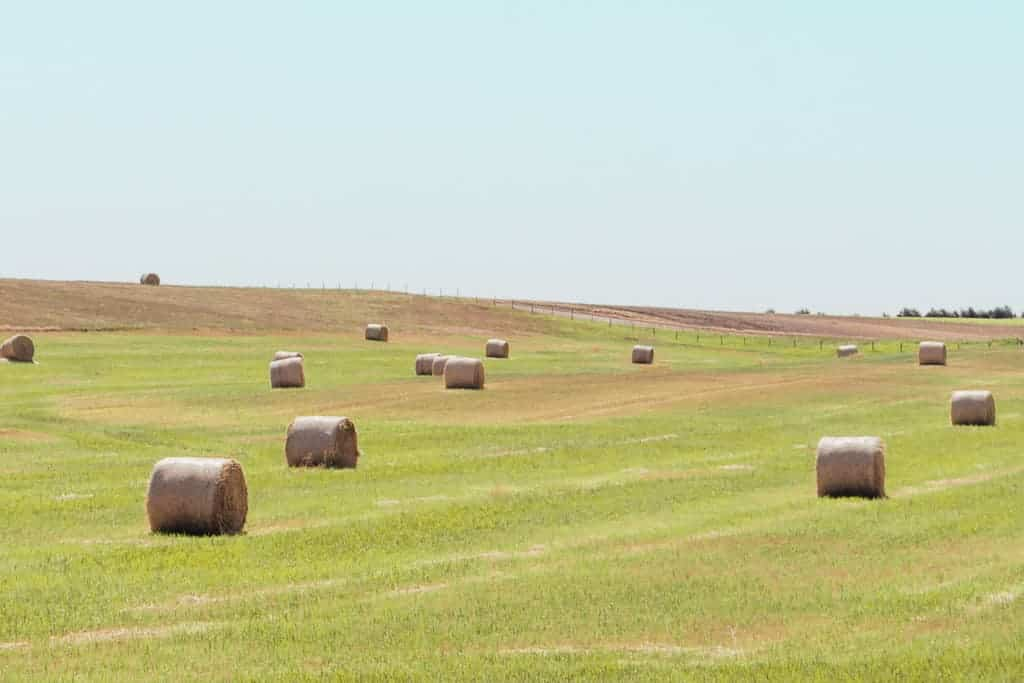 hay bales in a green grassy farmland