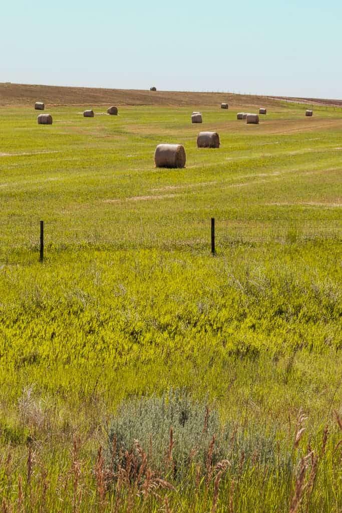 field of hay bales in Nebraska