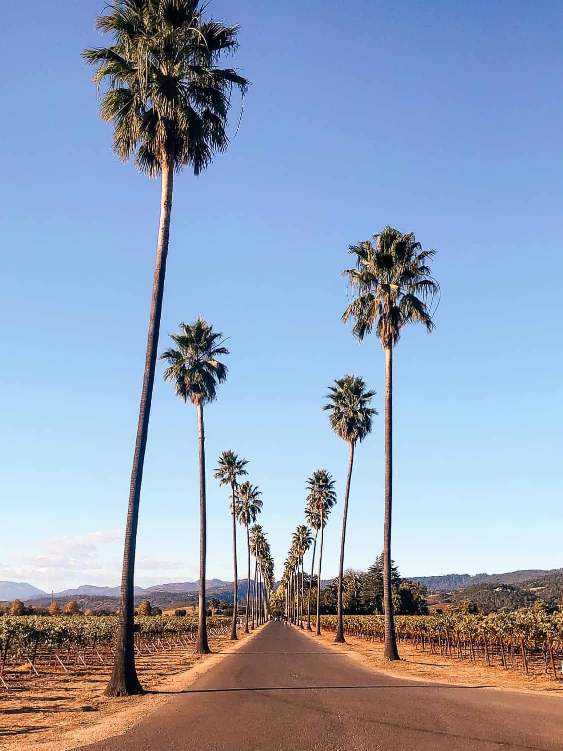 palm trees lining road in california