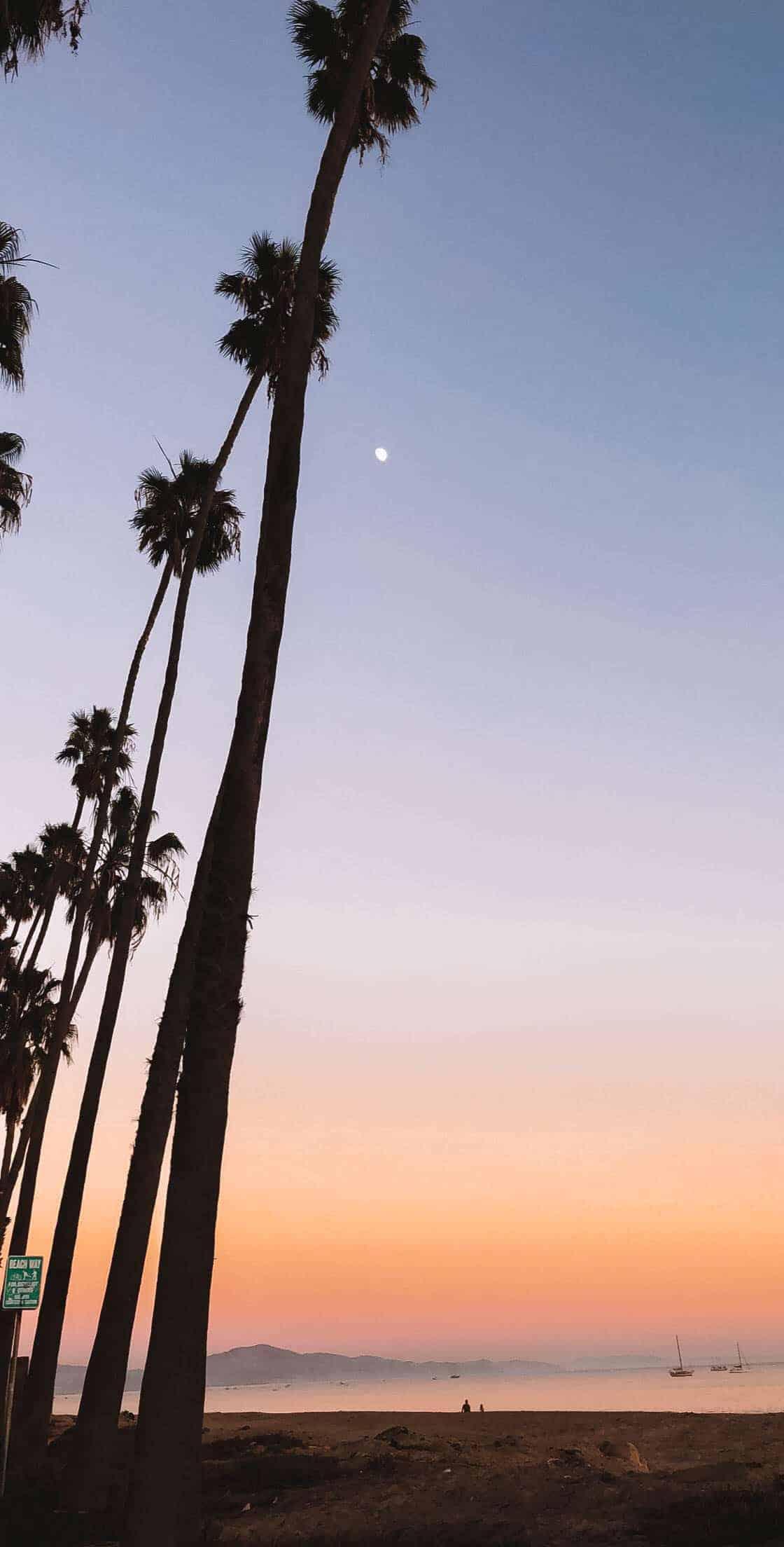palm trees against an orange lit sky