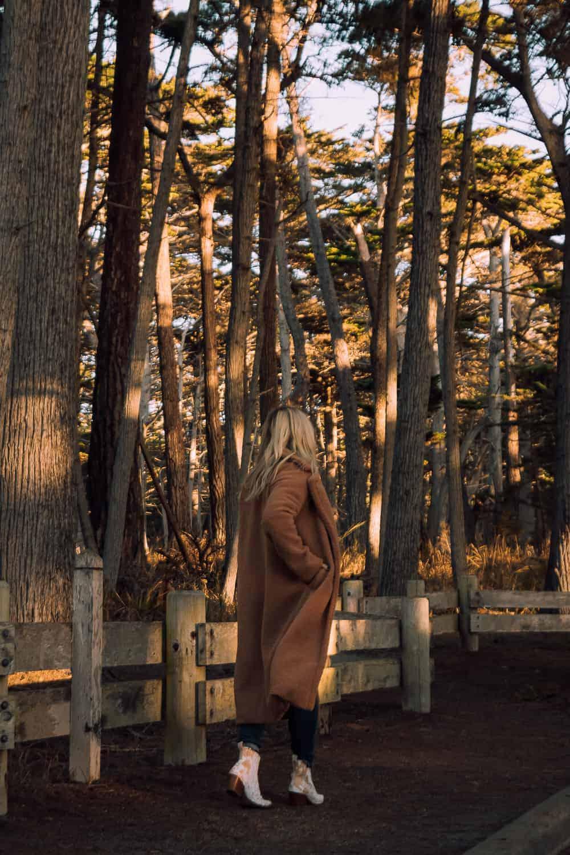 walking through cypress trees