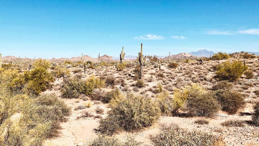arid arizona desert