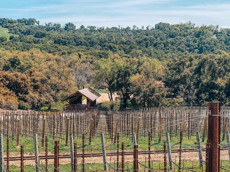 vineyards