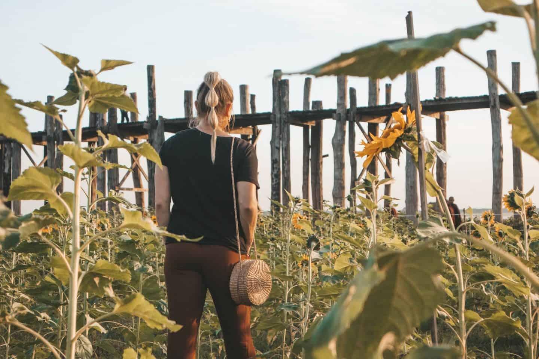 girl in sunflower field staring at ancient bridge in myanmar